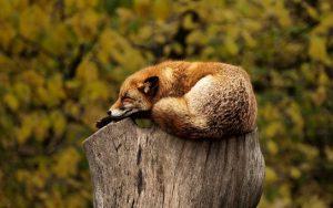psychic censor - fox