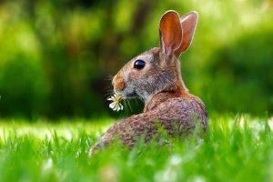 religion - hare