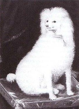 familiar - Boye Dog
