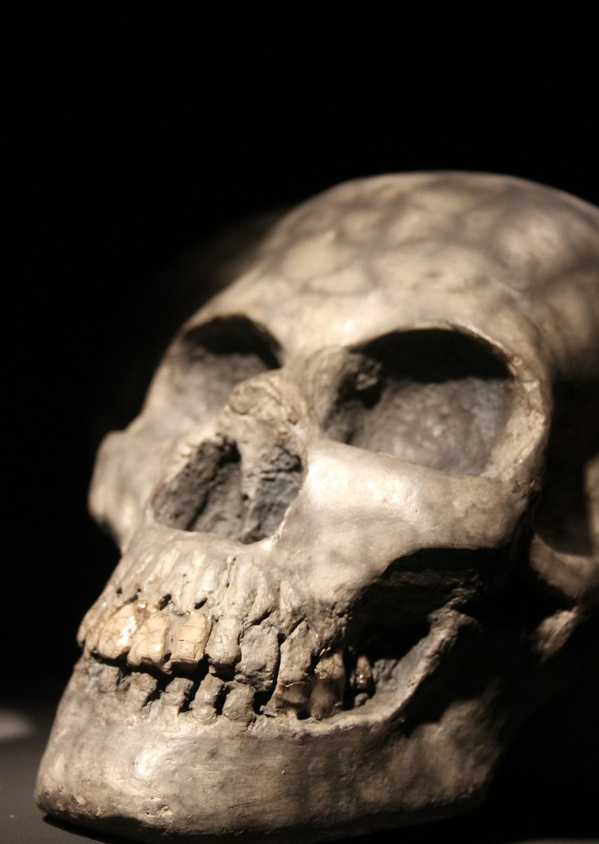 Dream - skull