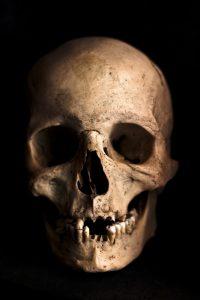 ancestor - skull