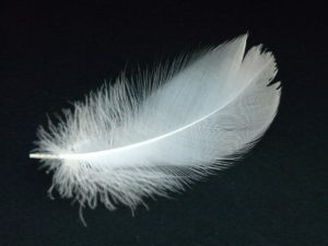 dead - white feather