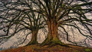 tree - gold